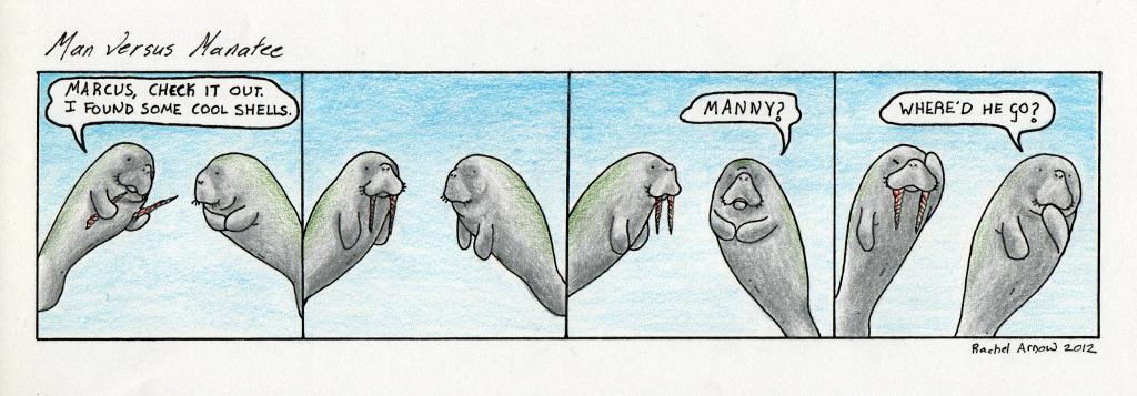Walrus Teeth