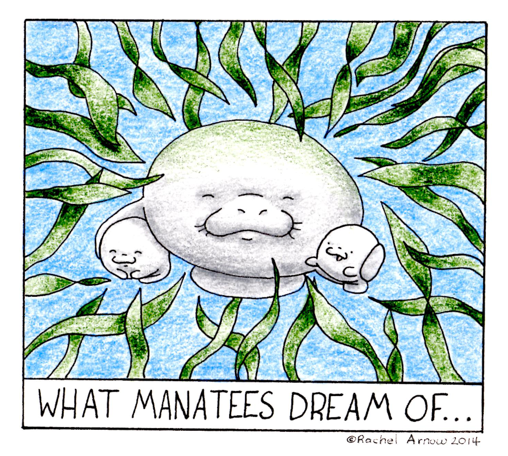 What Manatees Dream of
