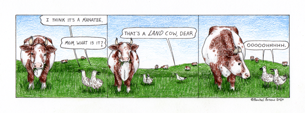 Land Cow