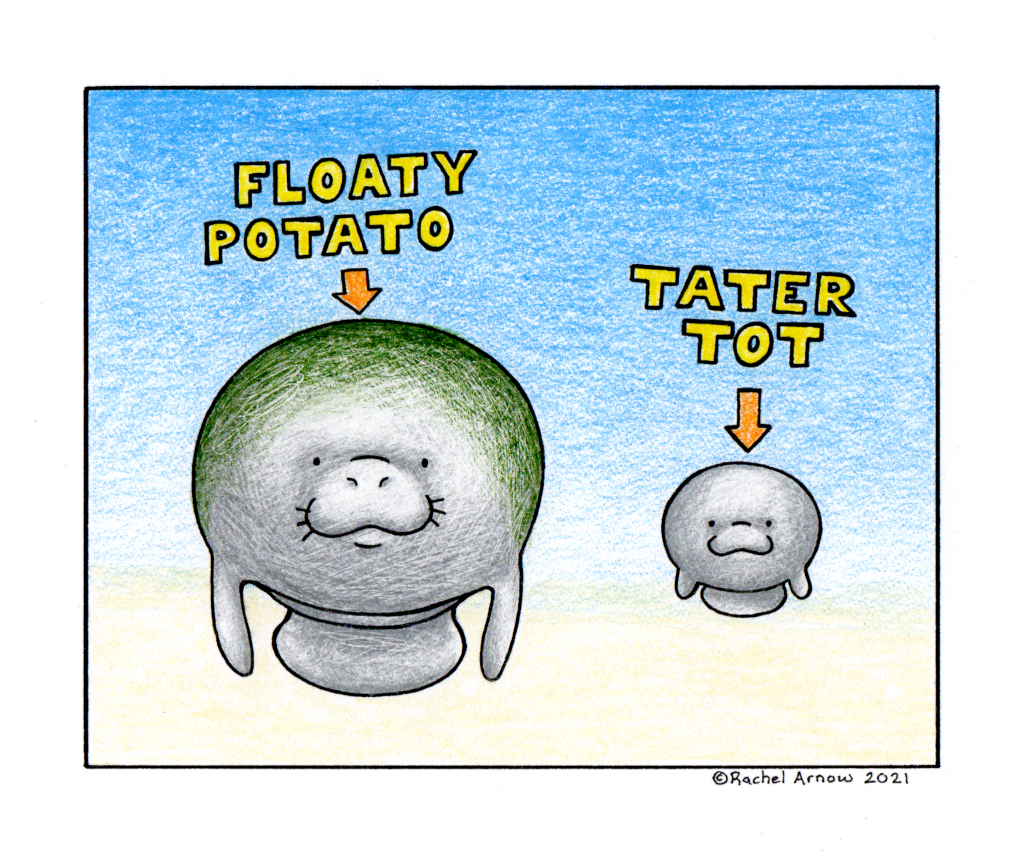 Sea Potatoes